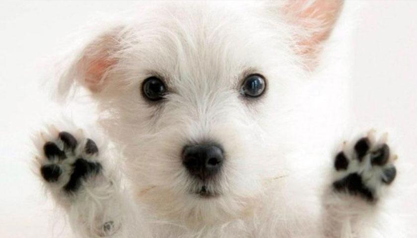 Zoonosis ya puso para la venta las Patentes para Perros a un costo de 570 pesos