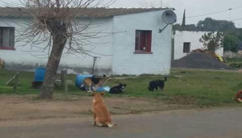 En Risso preocupa a los vecinos la cantidad de perros en la vía pública