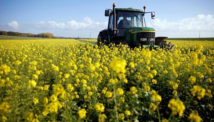 Afirman que Productividad de Cultivos Aumenta pero por Debajo del Año Pasado