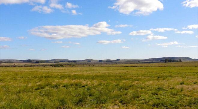 Vence el lunes Contribución Rural en Soriano