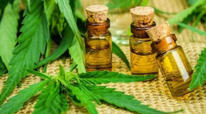 Empresas de Cannabis Medicinal se Instalarán en Nueva Helvecia